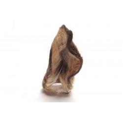 Oreille de chevreuil